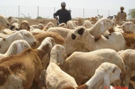 وزير الثروة الحيوانية يبحث مشروعات الإنتاج الحيواني بالجزيرة